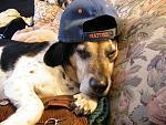 members/arielmac-albums-pets-picture106583-gangsta.jpg