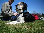 members/arielmac-albums-pets-picture106587-proud-newfoundland-beagle-mix-posing.jpg