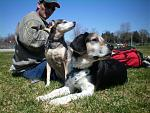 members/arielmac-albums-pets-picture106589-fashion-doggies.jpg