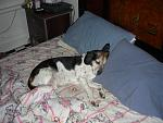 members/arielmac-albums-pets-picture106594-after-hard-day-doing-nothing.jpg