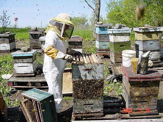 members/arob-albums-fishhunter-fishfinder-picture234994-beekeeping-warkworth-prison.jpg
